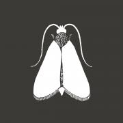 Mothlight Website